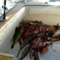 Fish on deck